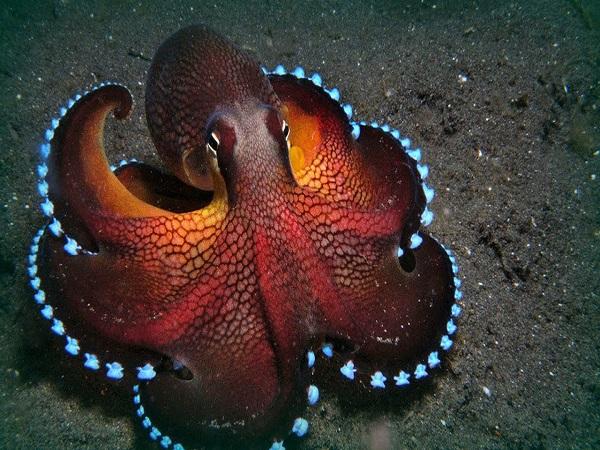 Mộng thấy bạch tuộc đánh con gì