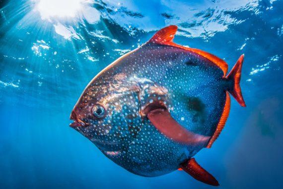 Mơ thấy cá nên đánh ngay con xổ số  nào là ăn chắc