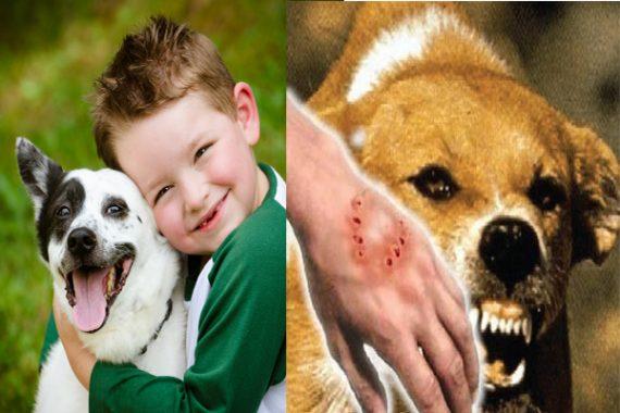Mơ thấy chó cắn có ý nghĩa gì và đánh con đề nào