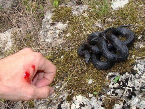 Mơ bị rắn cắn có ý nghĩa gì và đánh con số nào là may mắn