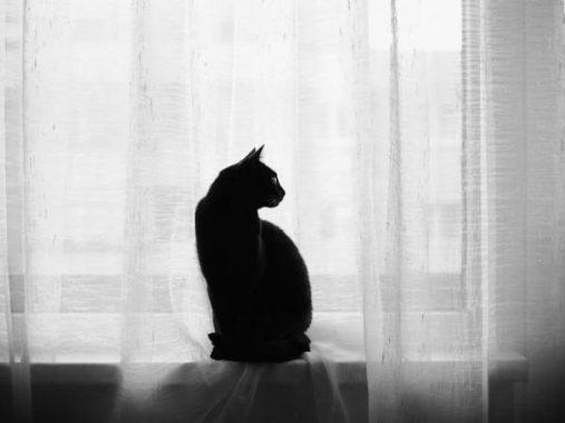 Mơ thấy mèo đen hên hay xui và nên đánh con số đề nào