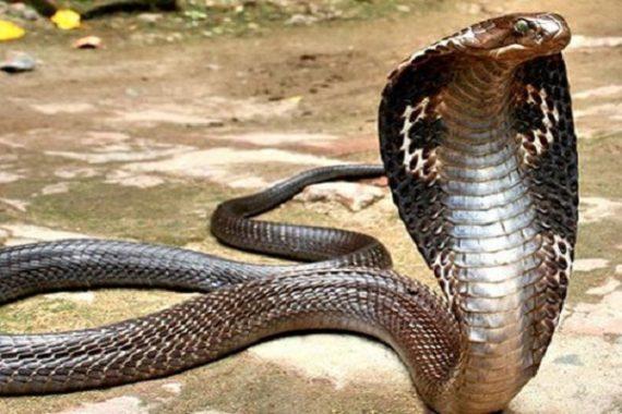 Nằm mơ thấy rắn đánh con loto nào- Ý nghĩa giấc mơ thấy rắn