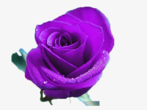 Mơ thấy màu tím đánh ngay con loto nào là ăn chắc nhất cho bạn