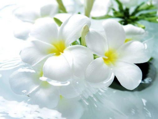 Mơ thấy màu trắng là điềm báo gì và nên đánh con số nào ăn chắc