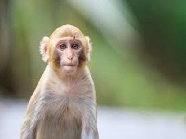 Nằm mơ thấy con khỉ con khỉ có phải điềm báo tốt lành?